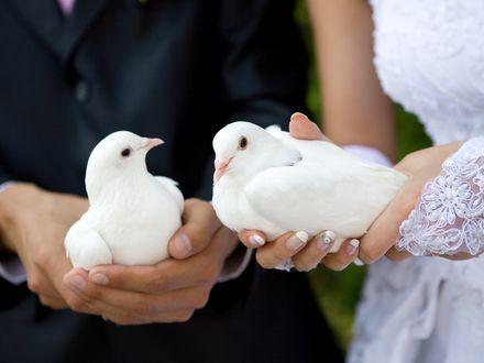 Białe gołębie, tel. 509-457-506, fot: kobieta.wp.pl