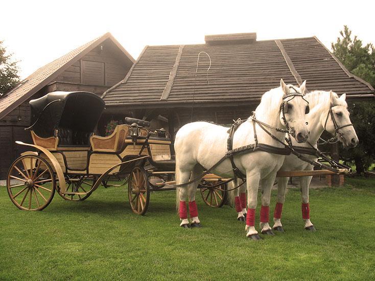 Dorożka na wesele, Mustang Biała Podlaska